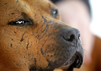Dog Fighting Vick How Positive Are Your ...